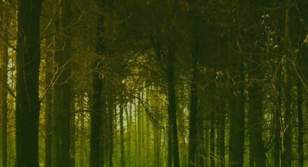 Atelier Sophrologie – Qi Gong pour enforcer votre vitalité, votre confiance, gérer le stress